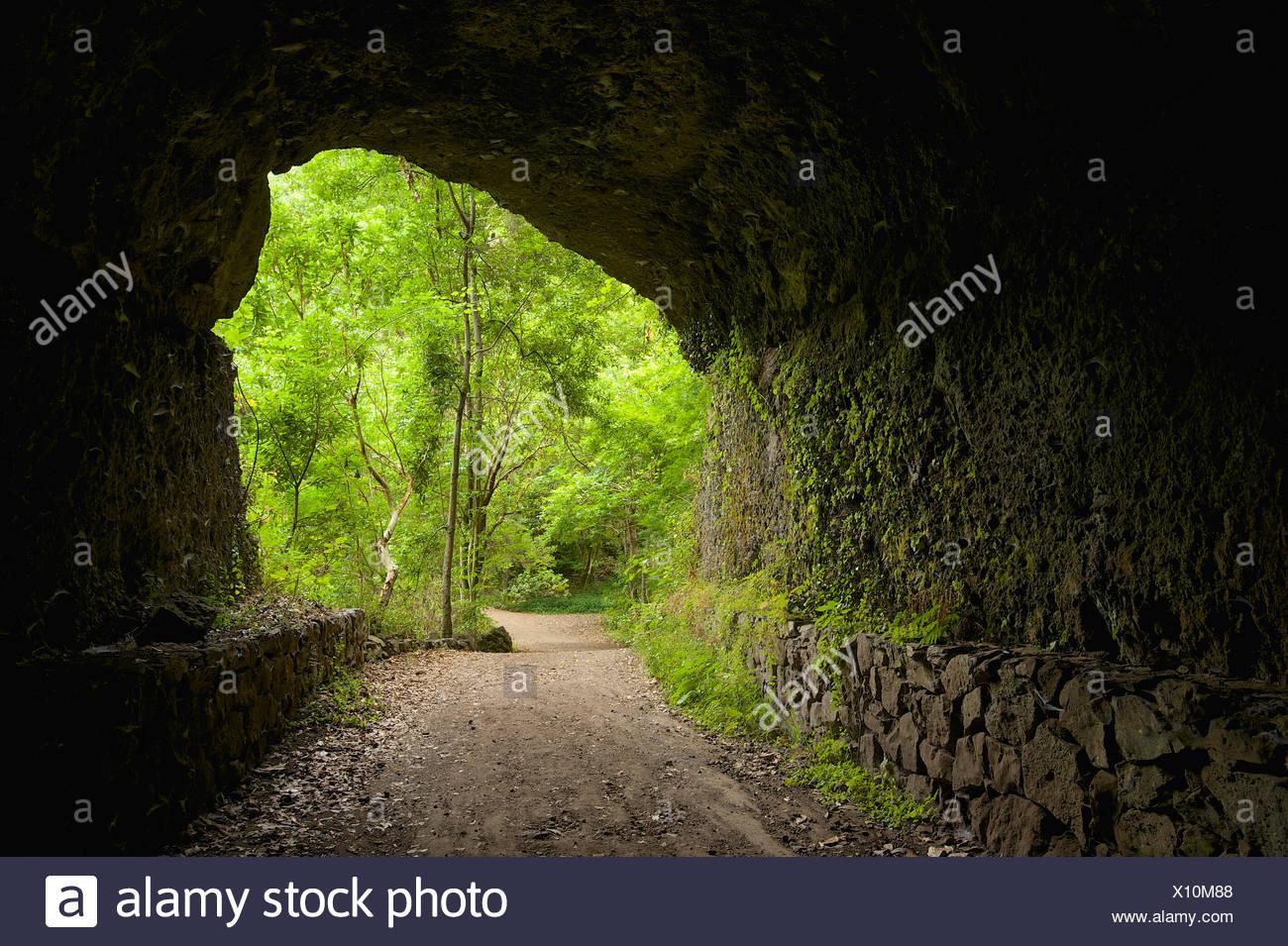 Kanaren, Kanarische Inseln, Inseln, La Palma, Spanien, Europa, draußen, Tag, niemand, Los Tilos, Weg, Weg, Weg, Höhle Stockbild