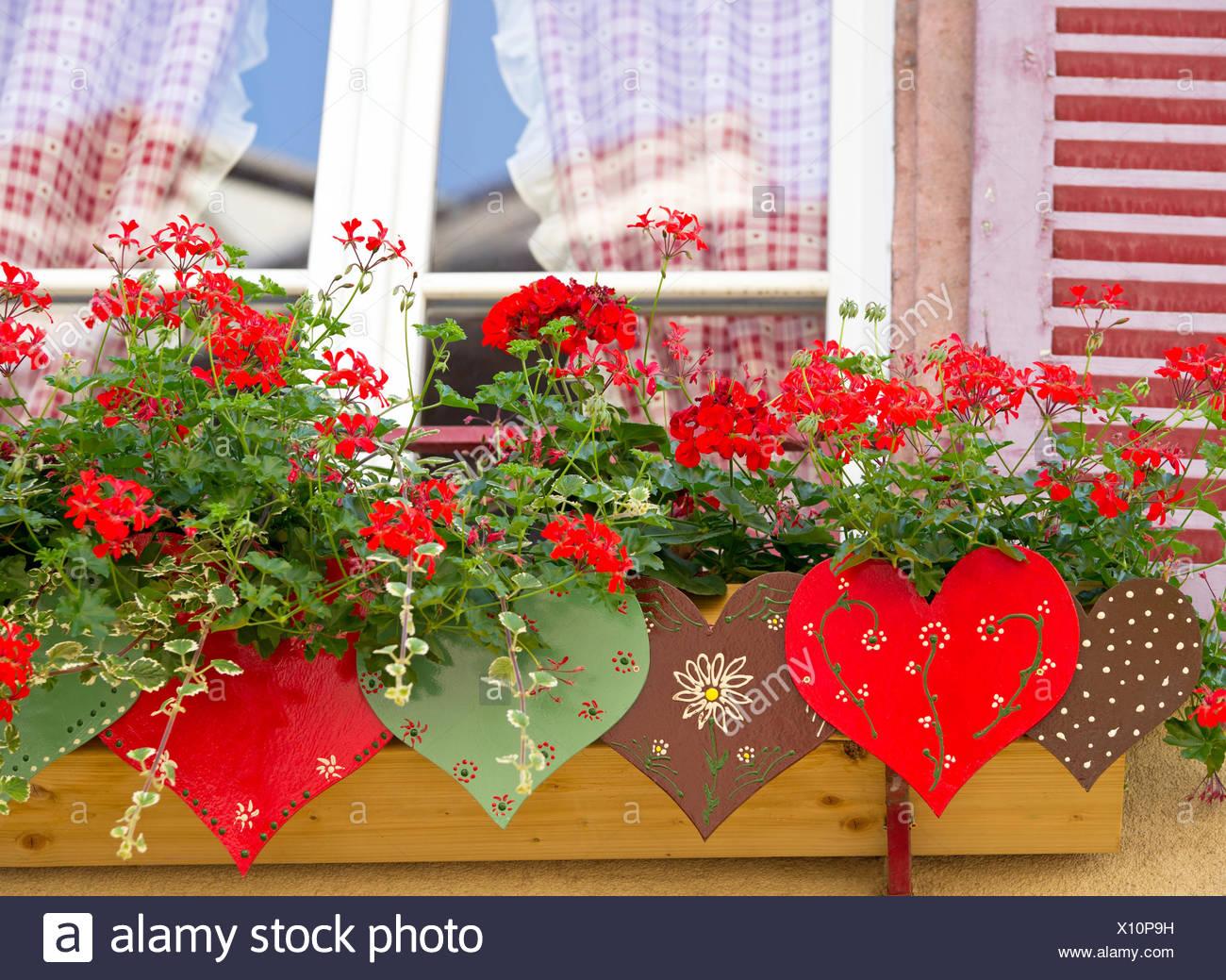 Fenster, Blumenkasten, Geranie Stockfoto, Bild: 275998061 - Alamy