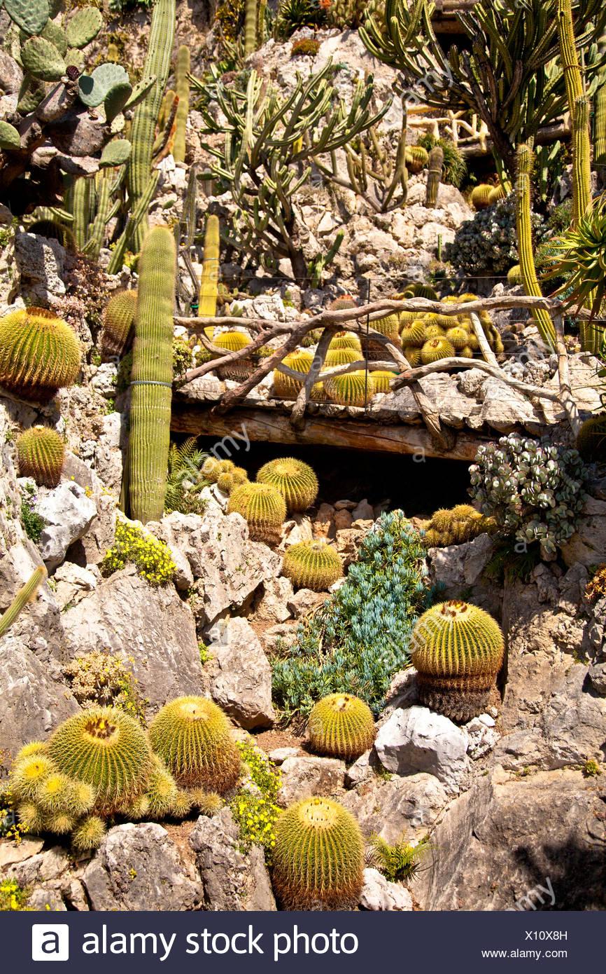 Exotischer Garten Im Fürstentum Von Monaco Europa Stockfoto Bild