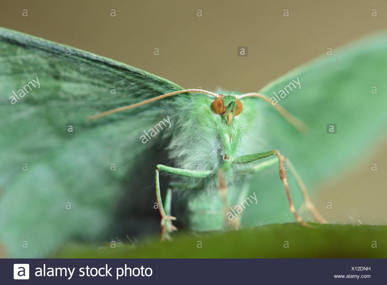 Großer Smaragd Stockbild