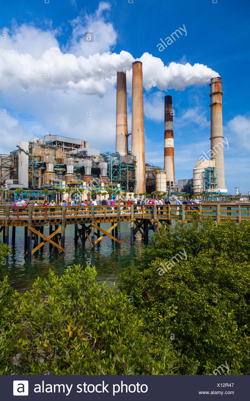 Seekuh, Mitte - Big Bend Kraftwerk Florida USA Tampa Electric anzeigen Stockbild