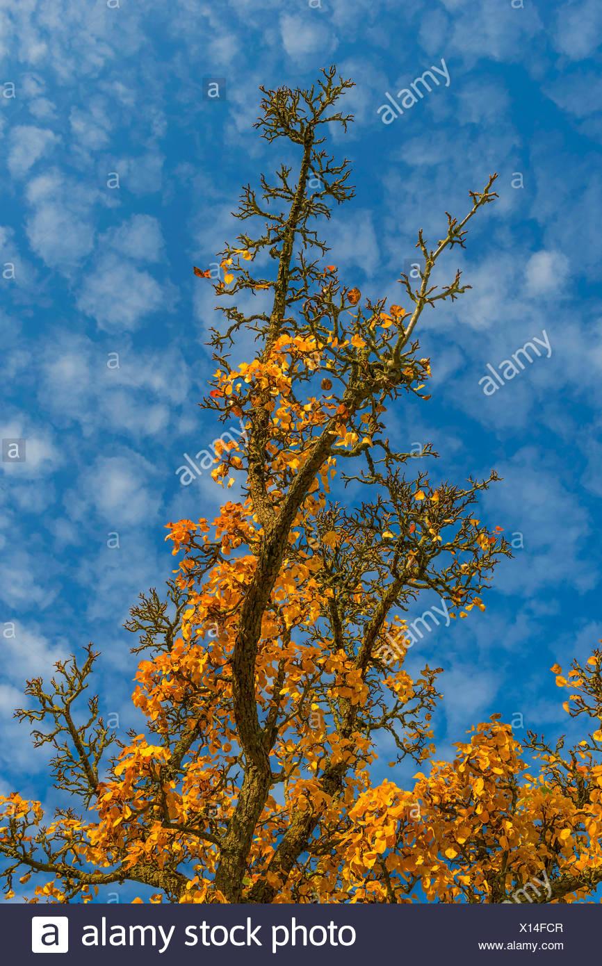 Tolle Herbst Farbung Seite Fotos - Malvorlagen Ideen - blogsbr.info
