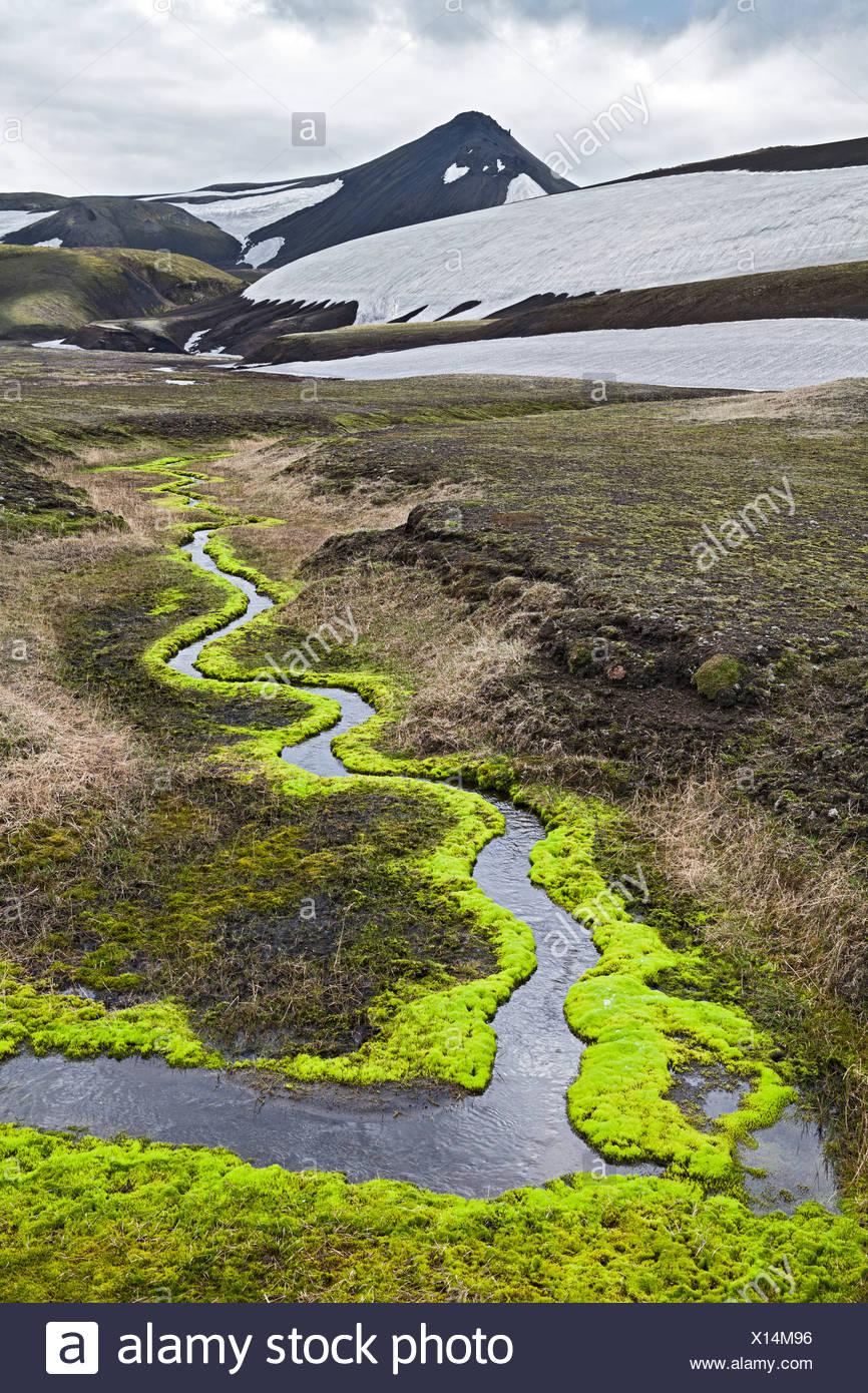 Ein mäandernder Bach, umgeben von leuchtend grünem Moos, unter Krakatindur Berg, Fjallabak Naturschutzgebiet, Hochland von Island Stockbild