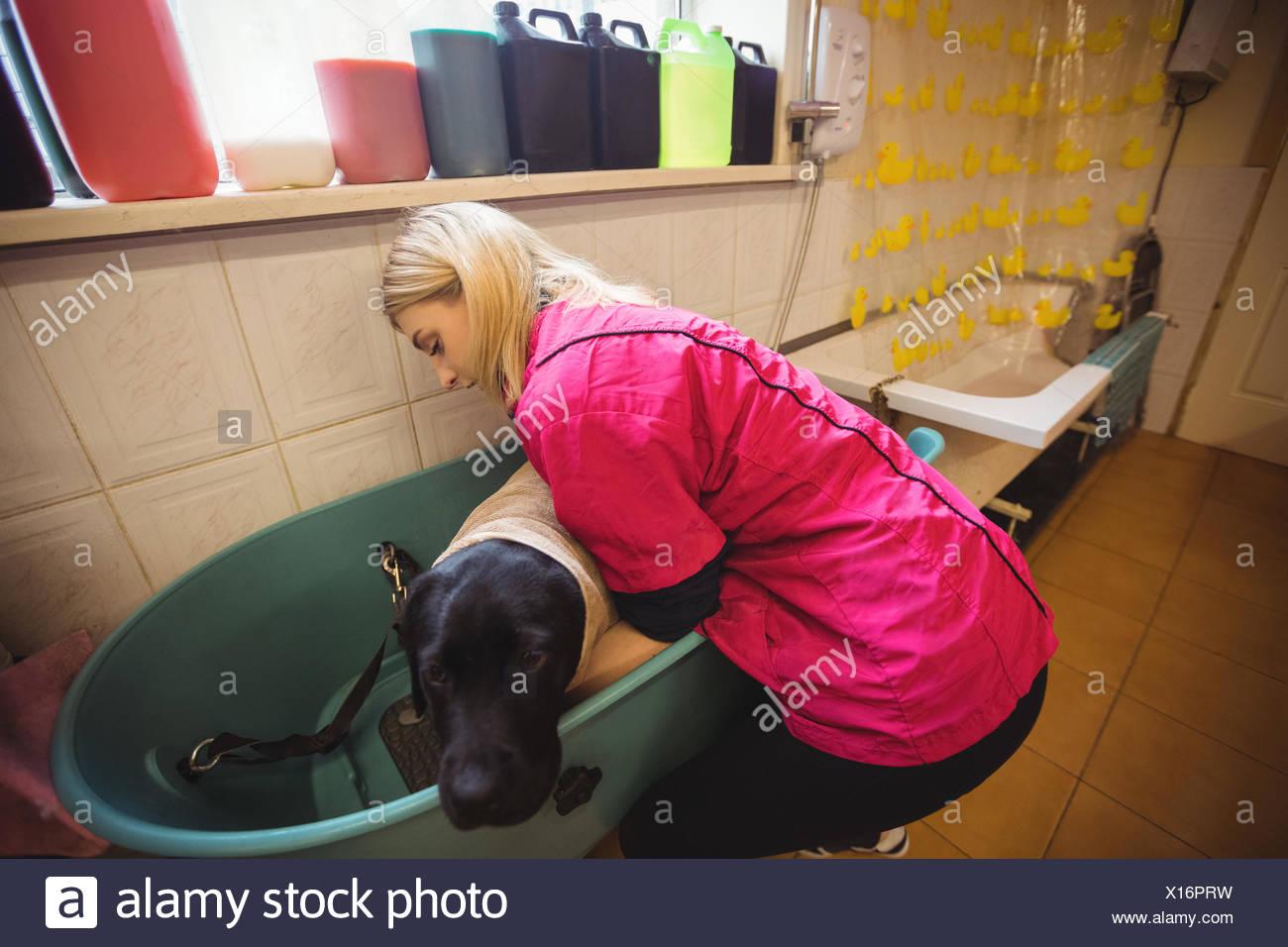 Frau Die Einen Hund In Der Badewanne Baden Stockfoto Bild
