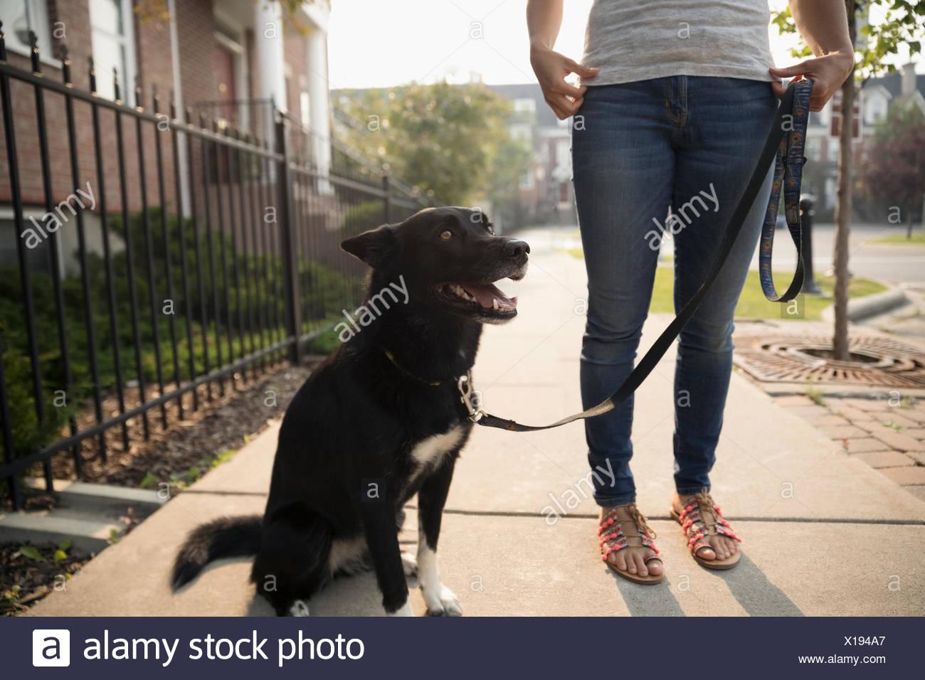 Frau mit Hund an der Leine auf Bürgersteig Stockbild