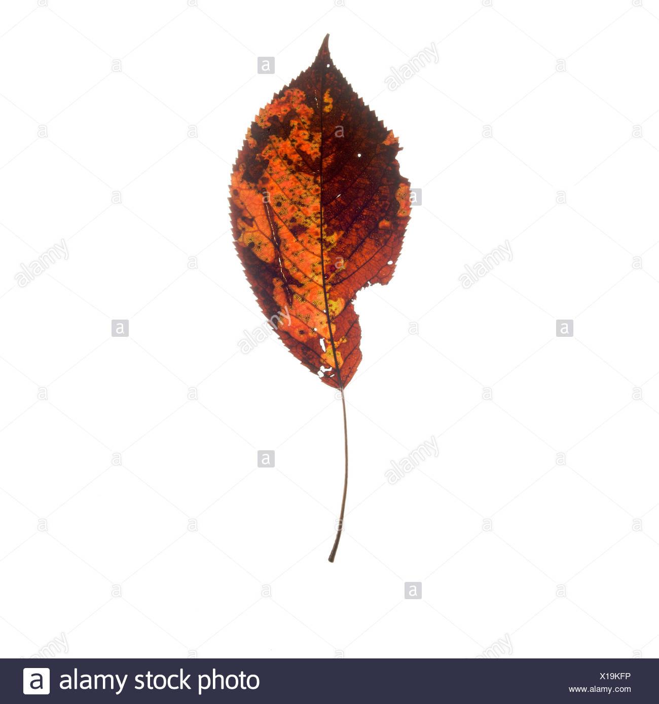 Gemütlich Herbst Färbung Blatt Ideen - Entry Level Resume Vorlagen ...