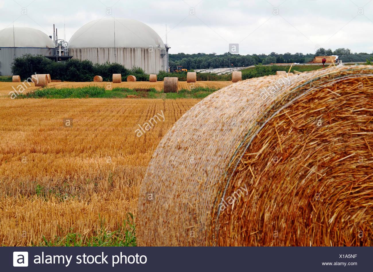 abgeernteten Maisfeld mit Ballen Stroh und Biogas-Anlage in den Hintergrund, Deutschland, Baden-Württemberg, Kehl Stockbild