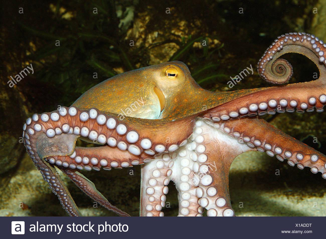 Niedlich Oktopus Färbung Seite Bilder - Malvorlagen Von Tieren ...