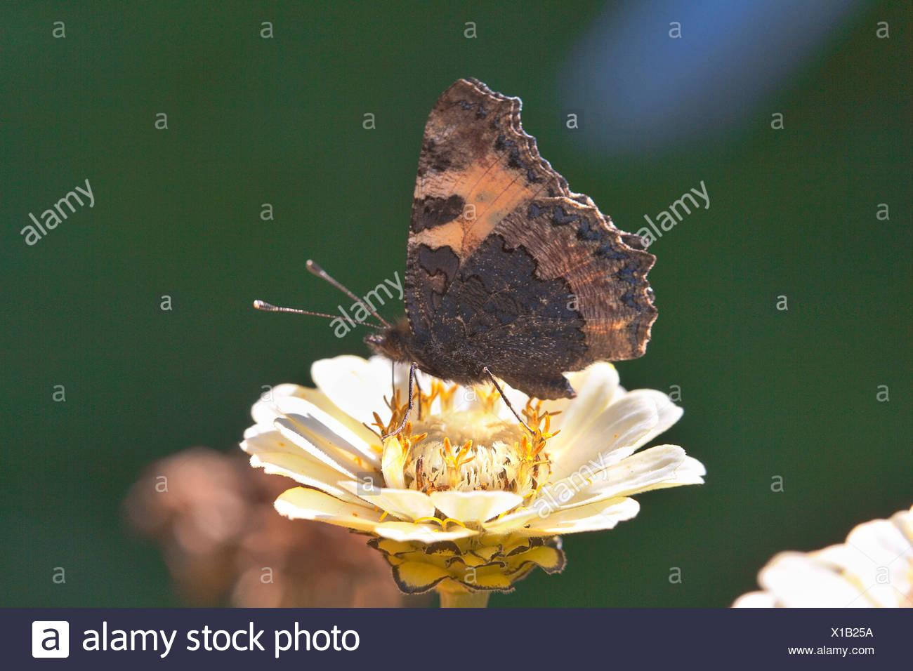 Großzügig Schmetterling Lebenszyklus Färbung Seite Zeitgenössisch ...