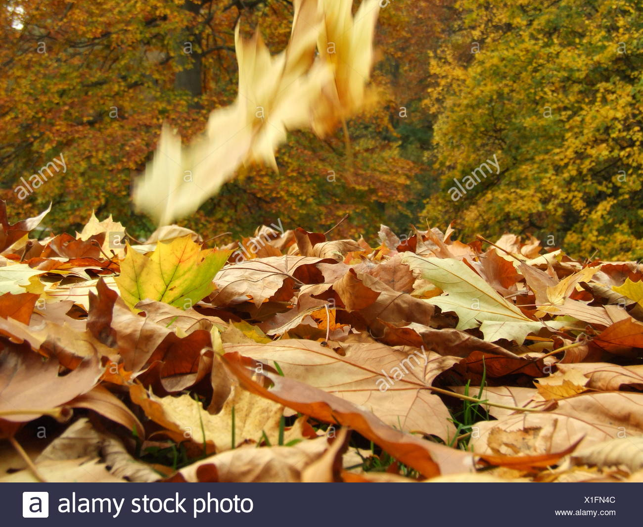 Schön Malvorlagen Fallen Blätter Zeitgenössisch - Druckbare ...