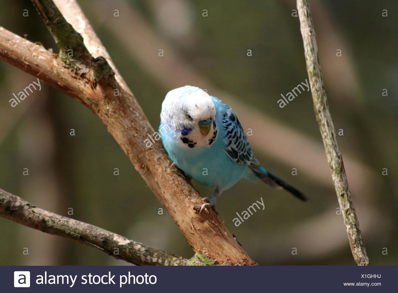 Tolle Baby Vogel Färbung Seite Ideen - Malvorlagen Von Tieren ...