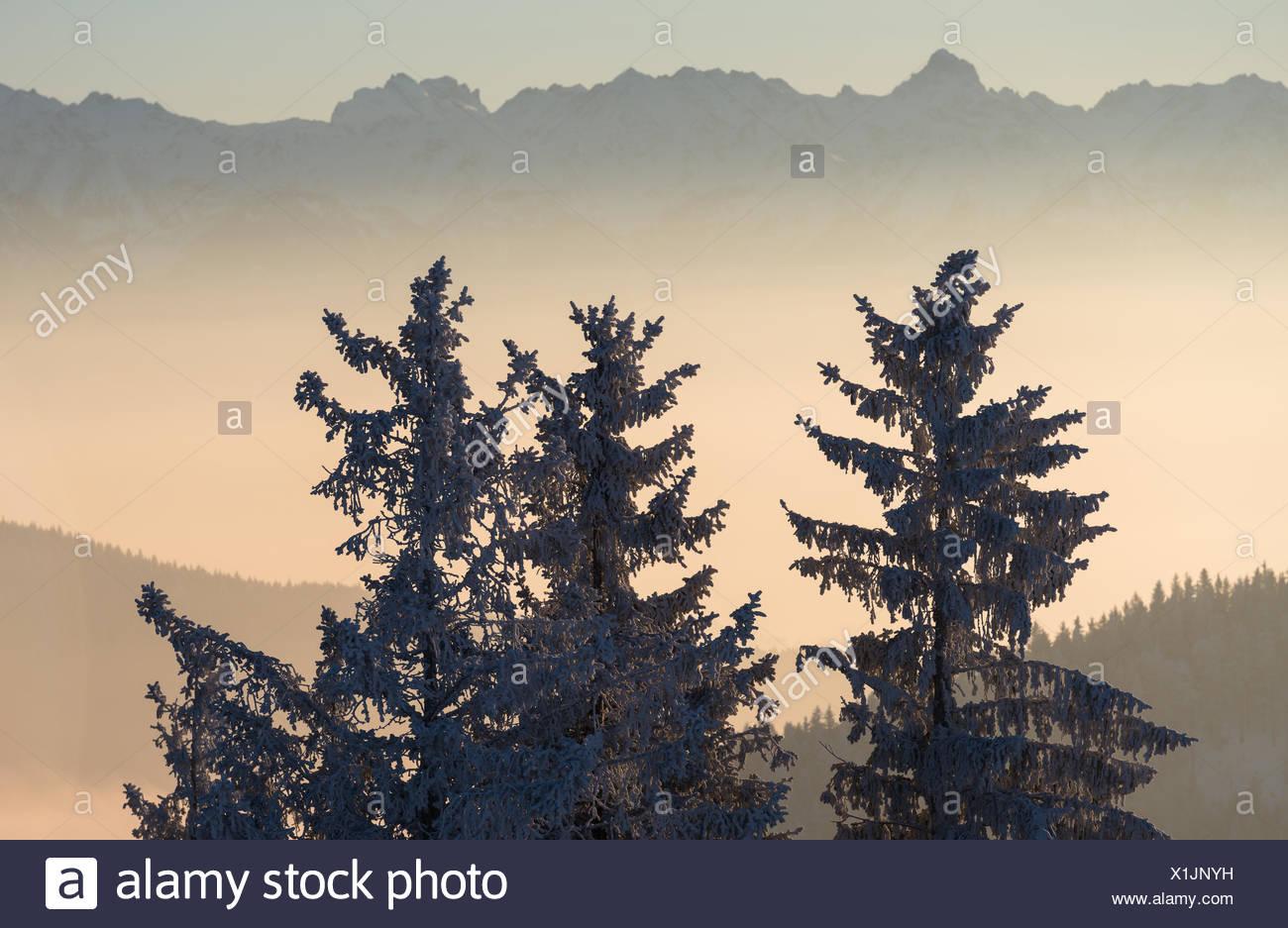 Schweiz, Appenzell Ausserrhoden, Bäume im Winter Stockbild