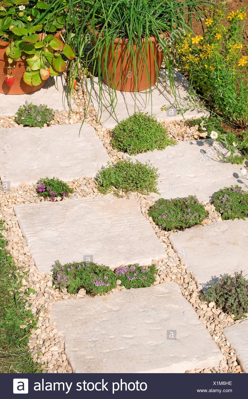 trittsteine mit kräutern dazwischen wachsen zu lassen stockfoto