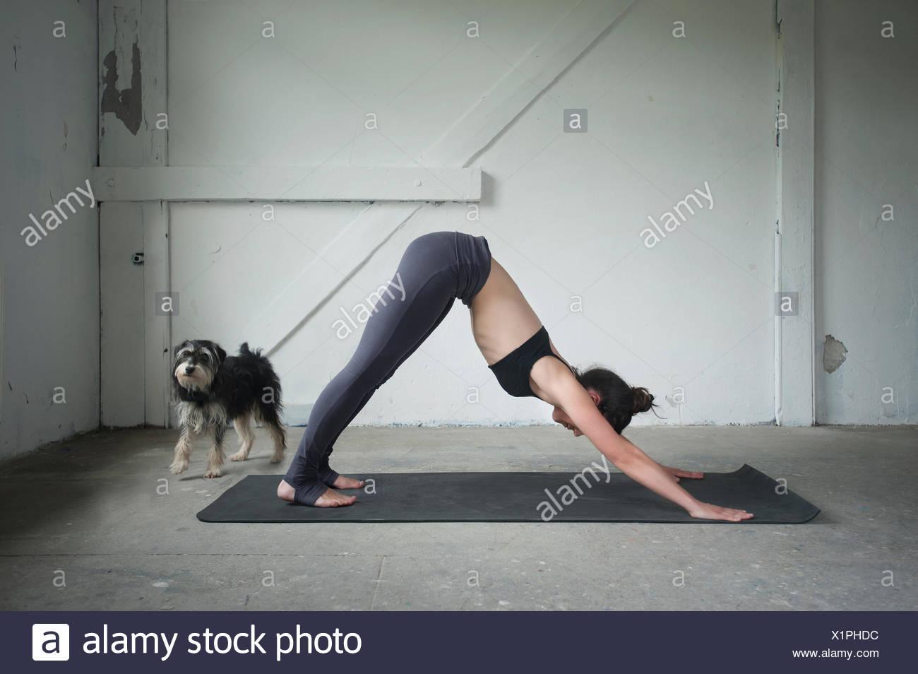 Mitte Erwachsene Frau üben nach unten schauenden Hund darstellen Sie, im Yoga-Studio, München, Bayern, Deutschland Stockbild