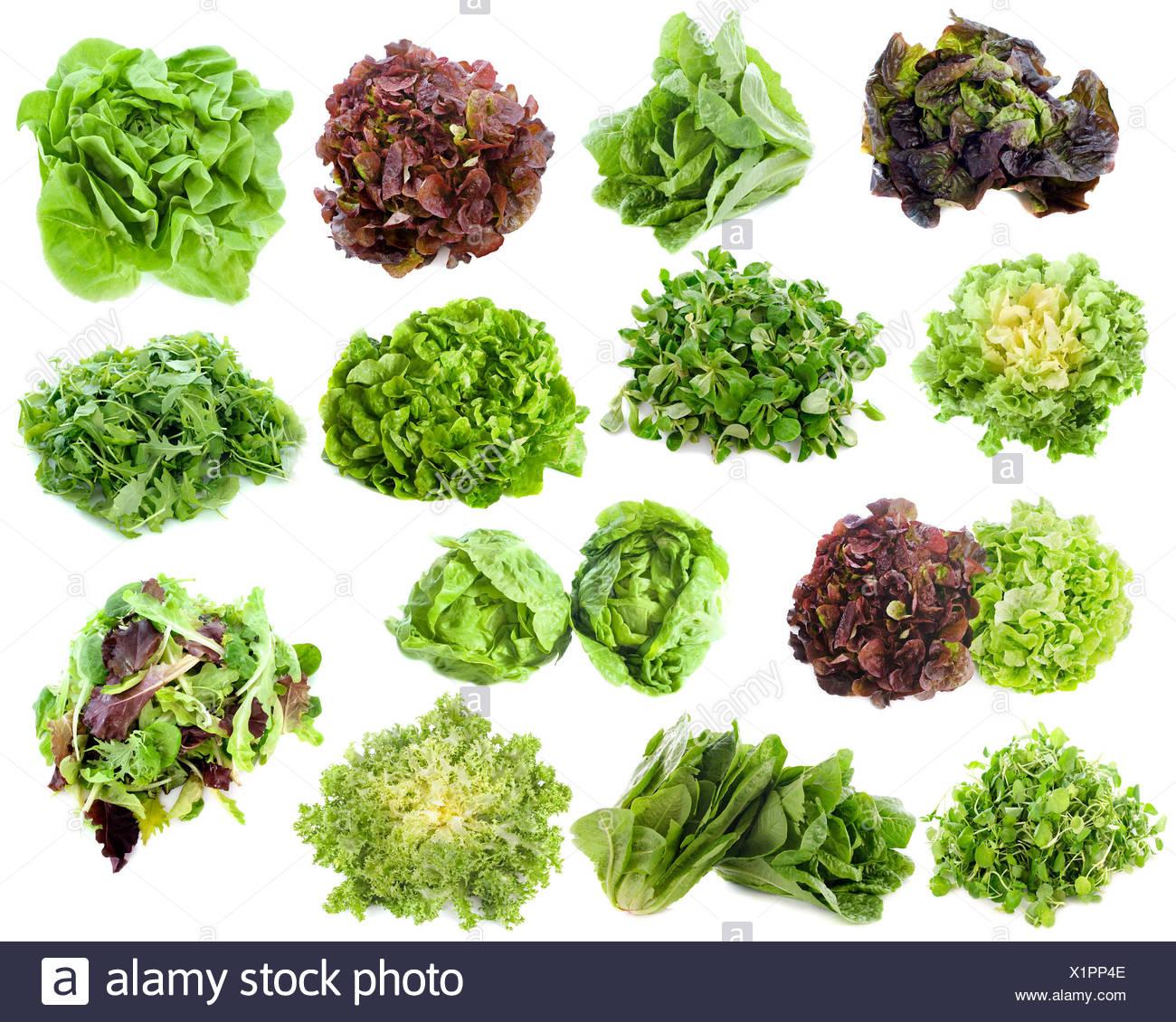 Chicorée Gruppe Endivien Salat Grün Lebensmittel