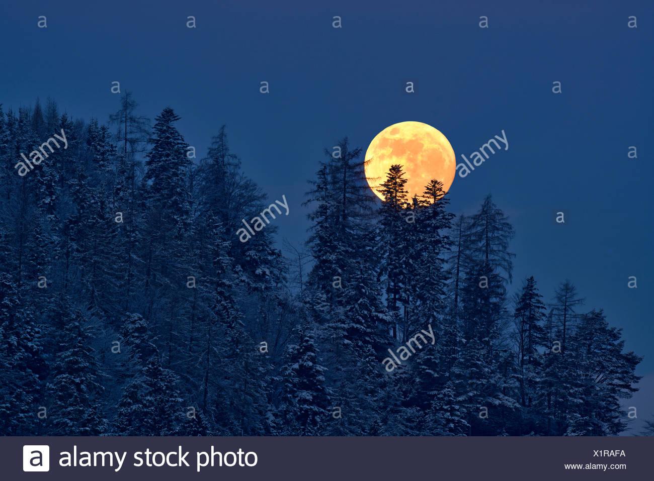 Der Vollmond steigt über einen Winterwald, Tirol, Österreich Stockbild