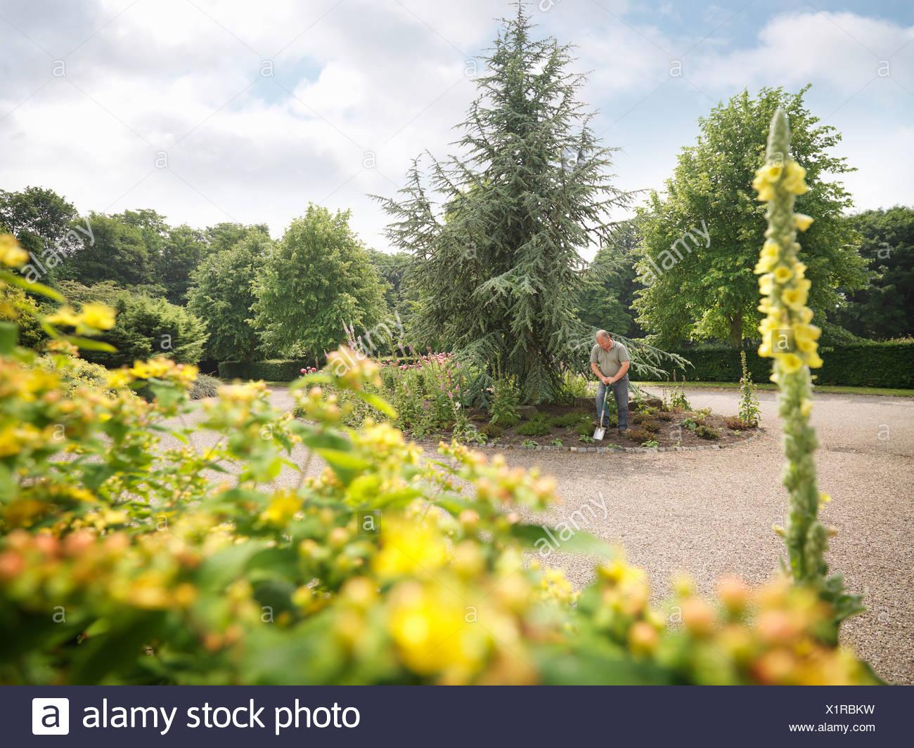 Gärtner arbeiten an Grenze Stockbild