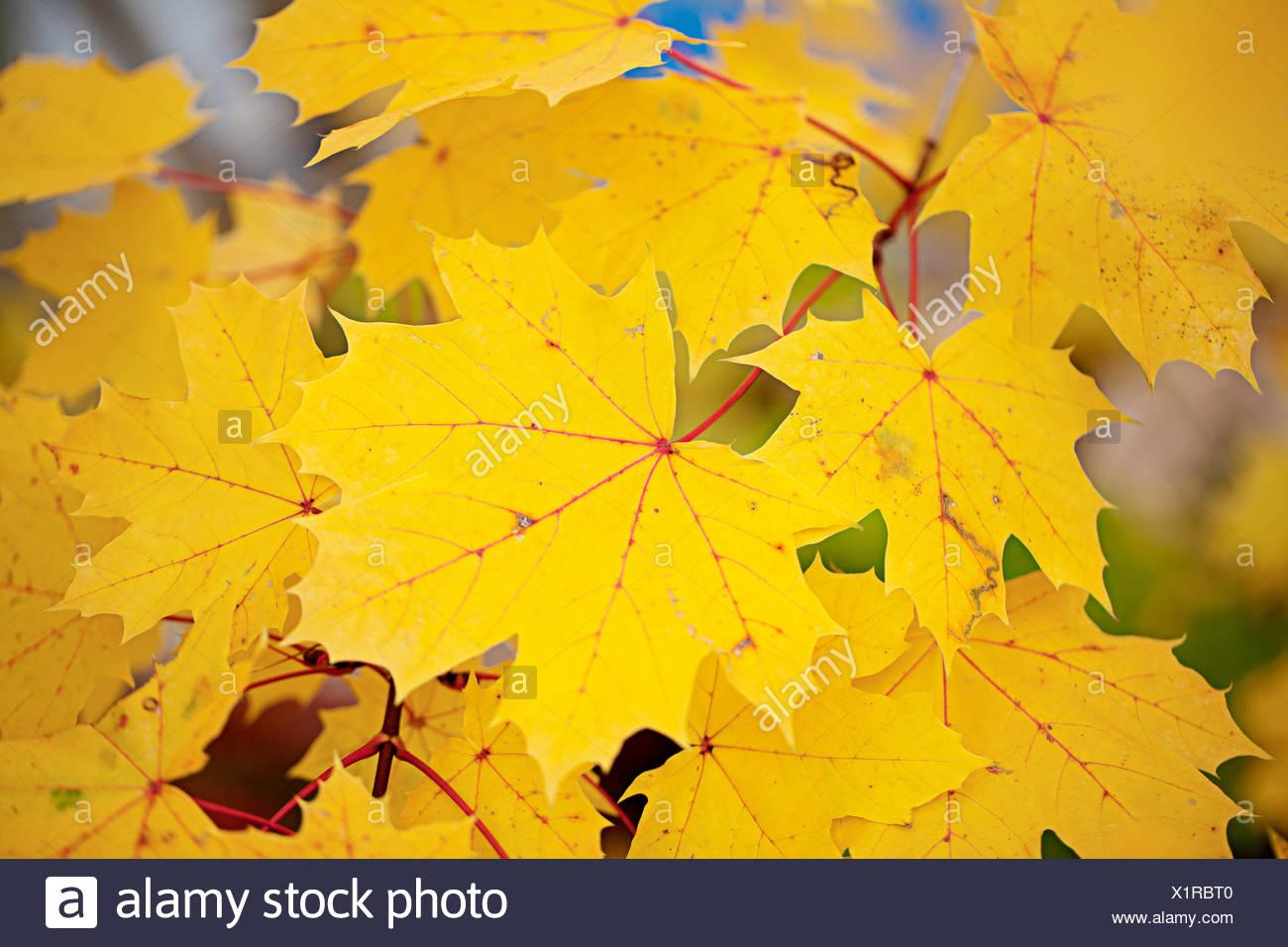 Nett Herbstblätter Färbung Seite Bilder - Beispiel Business ...