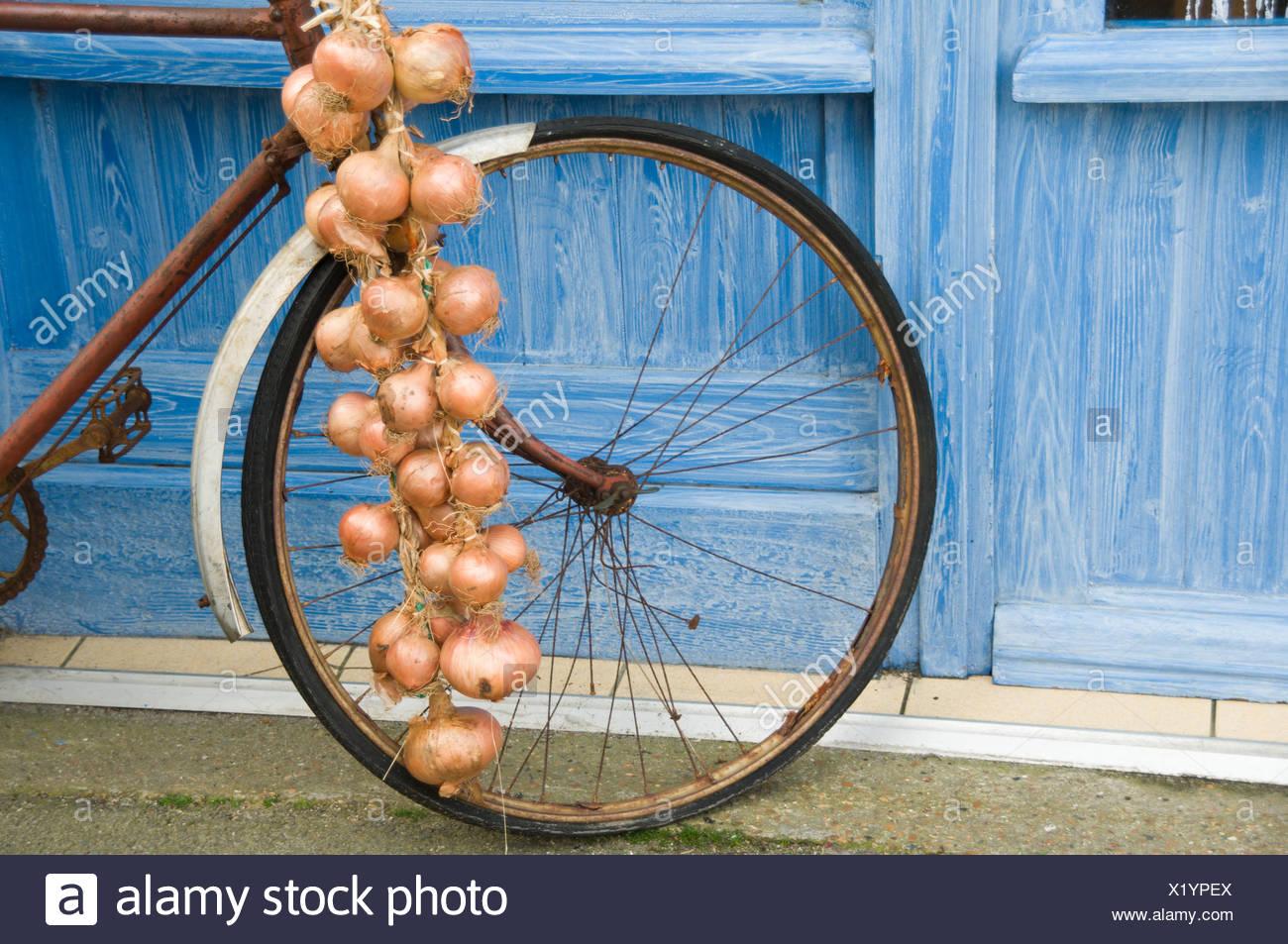 Klassische Zwiebeln auf einem Fahrrad Frankreich Stockfoto