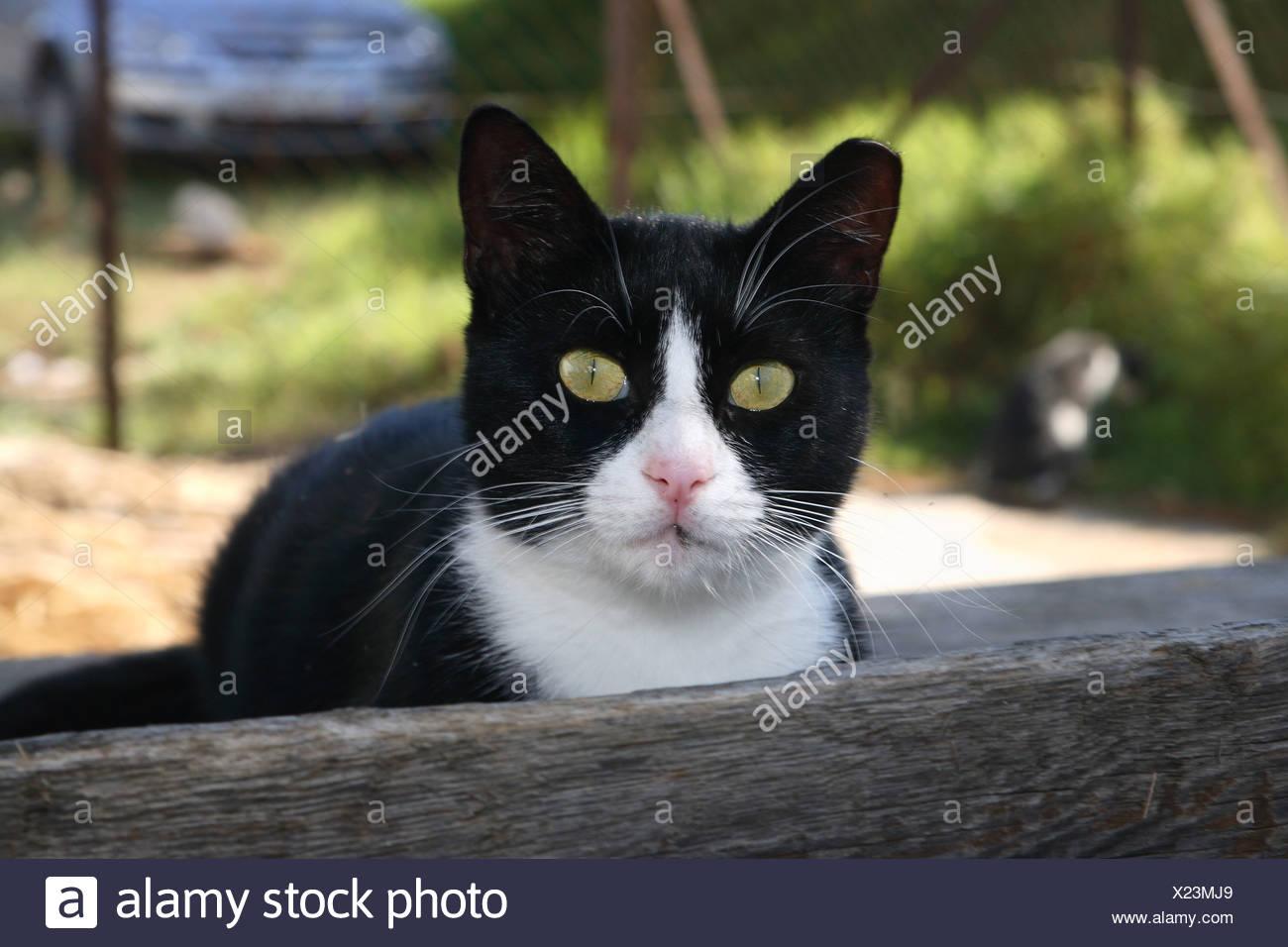 Katze Schwarz-Weiß-Kamera Porträt außerhalb Tier Haustier Hauskatze ...