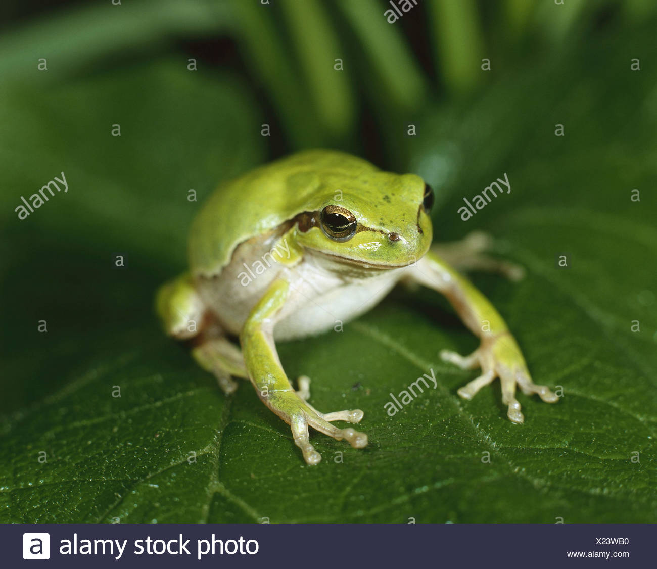 Fein Frosch Färbung Fotos - Malvorlagen Von Tieren - ngadi.info