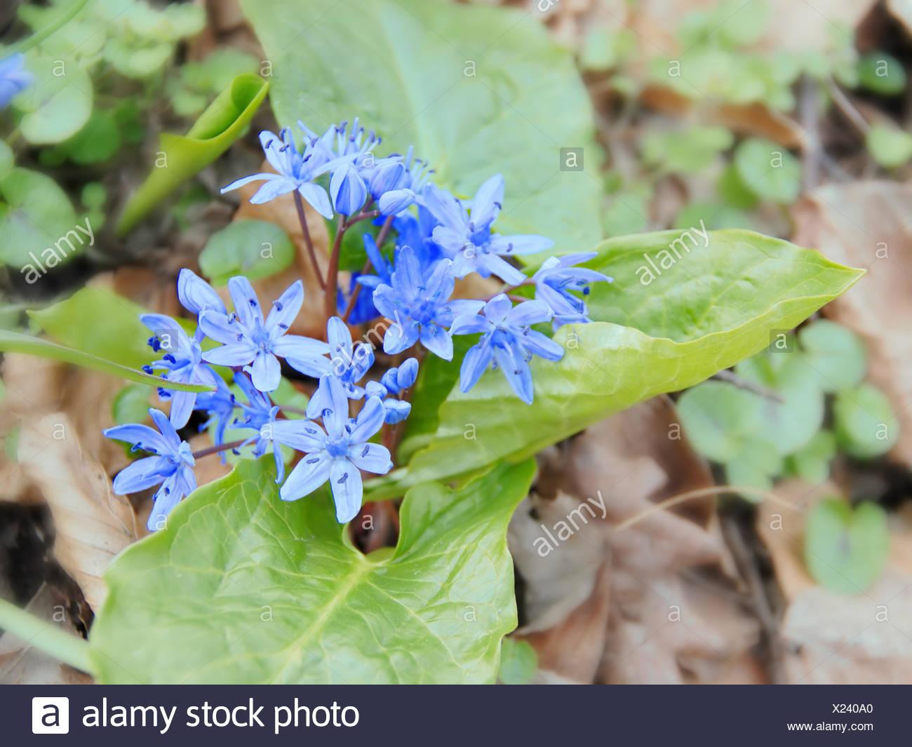 Erste Fruhlingsblumen Stockfoto Bild 276683288 Alamy