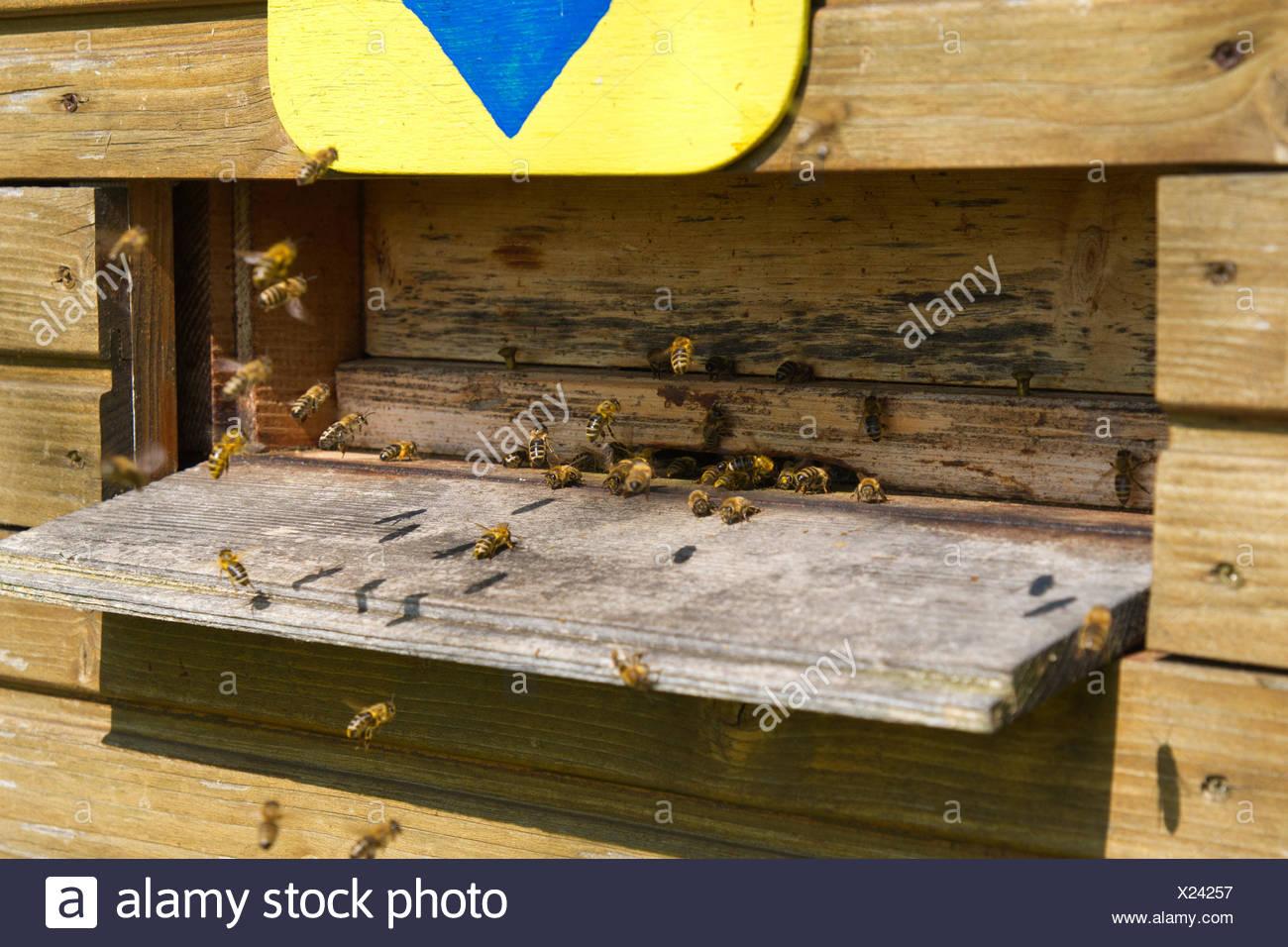 Bee Sting Stockfotos & Bee Sting Bilder - Seite 4 - Alamy