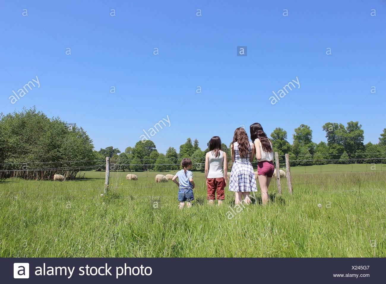 Rückansicht von vier Mädchen, die durch Zaun Blick auf Schafe stehen Stockbild