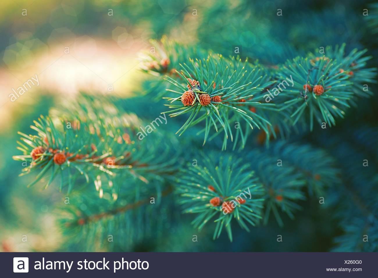 Weihnachtsbaum Herkunft.Weihnachtsbaum Im Freien Stockfotos Weihnachtsbaum Im Freien