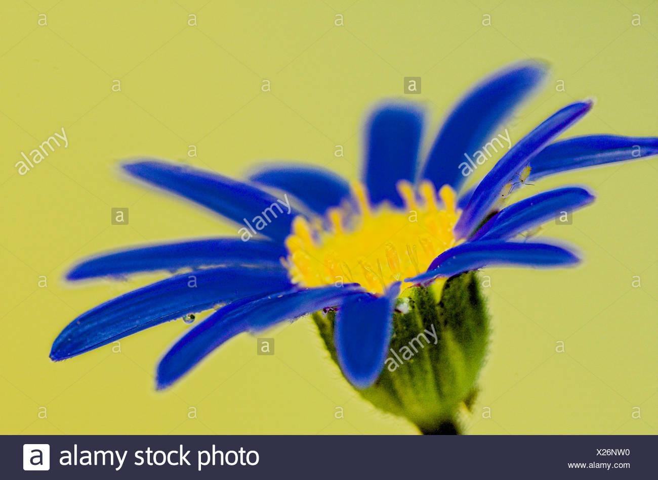 Charmant Blumengarten Färbung Bilder Fotos - Malvorlagen-Ideen ...