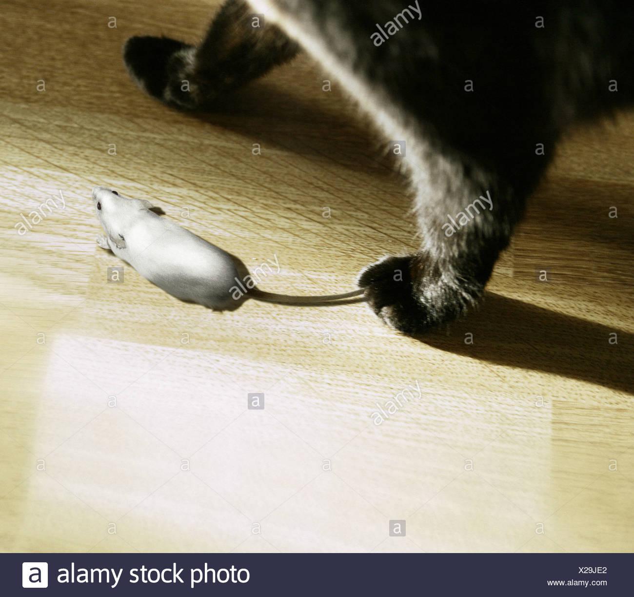 Eine Katze Eine Maus Fangen Stockfoto Bild 276807274 Alamy