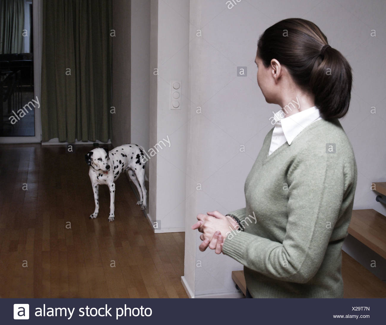 Fantastisch Flach, Frau, Dalmatiner, Blickkontakt, Parkett, Bodenbelag, Person,  Eigentümer,
