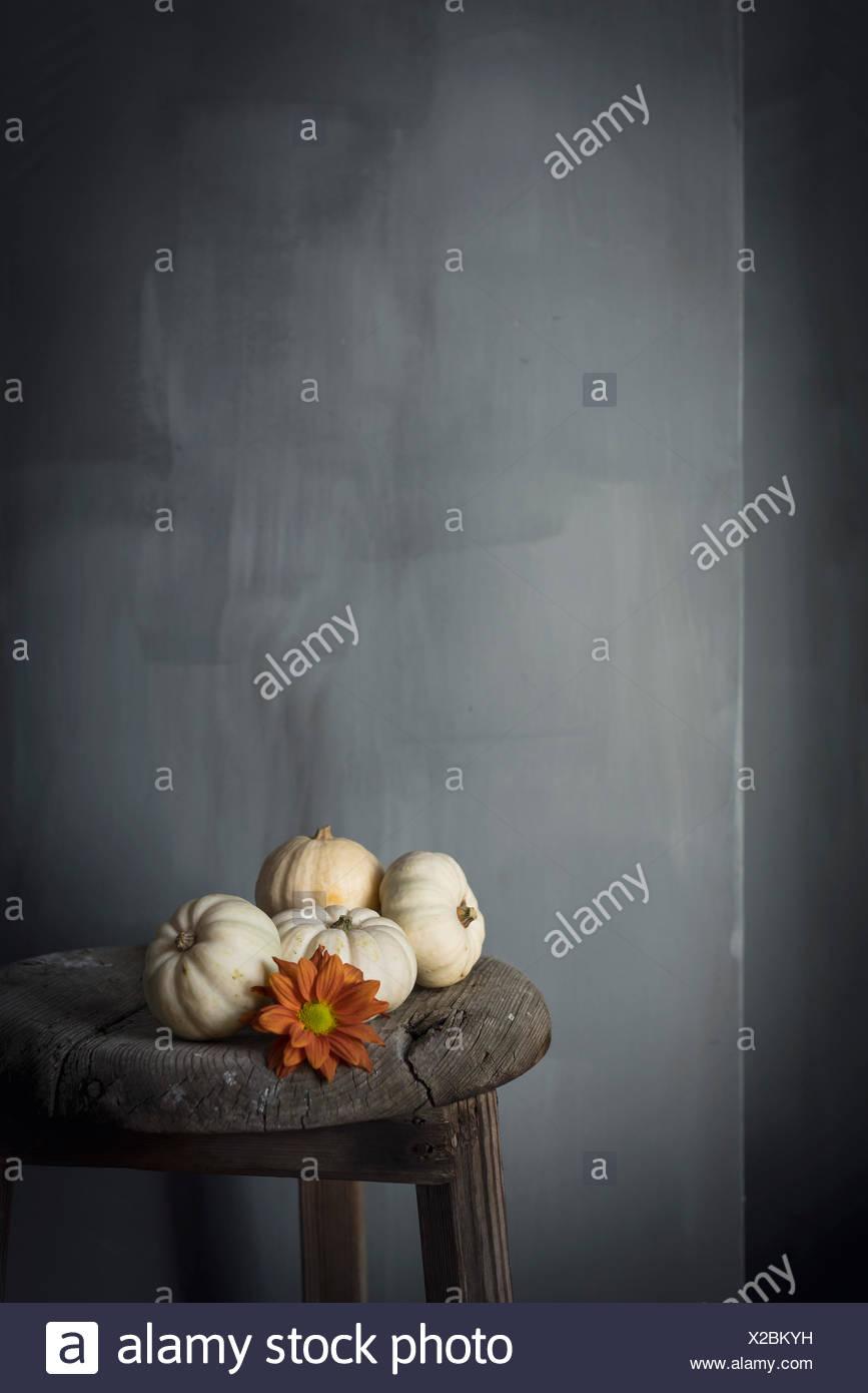 White Mini Kürbisse gegen eine graue Wand Stockfoto