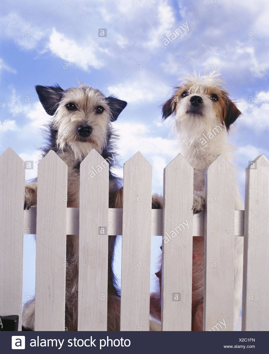 Hunde Garten Zaun M Saugetiere Canidae Haustiere Hybrid