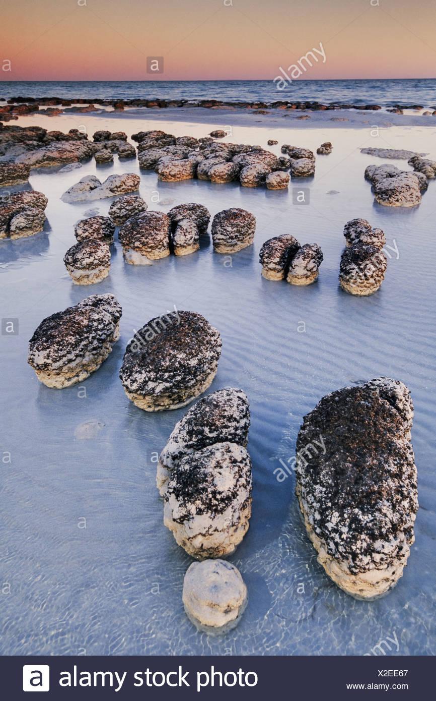 Shark Bay Australien Stromatolithen im Morgengrauen Shark Bay Australien Stockbild