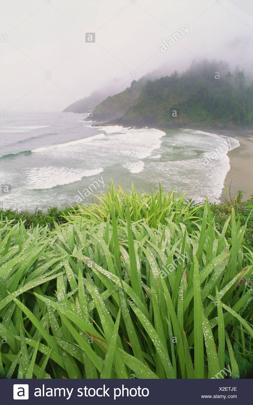 Heceta Head ist eine Landzunge an der pazifischen Küste von Oregon Stockbild