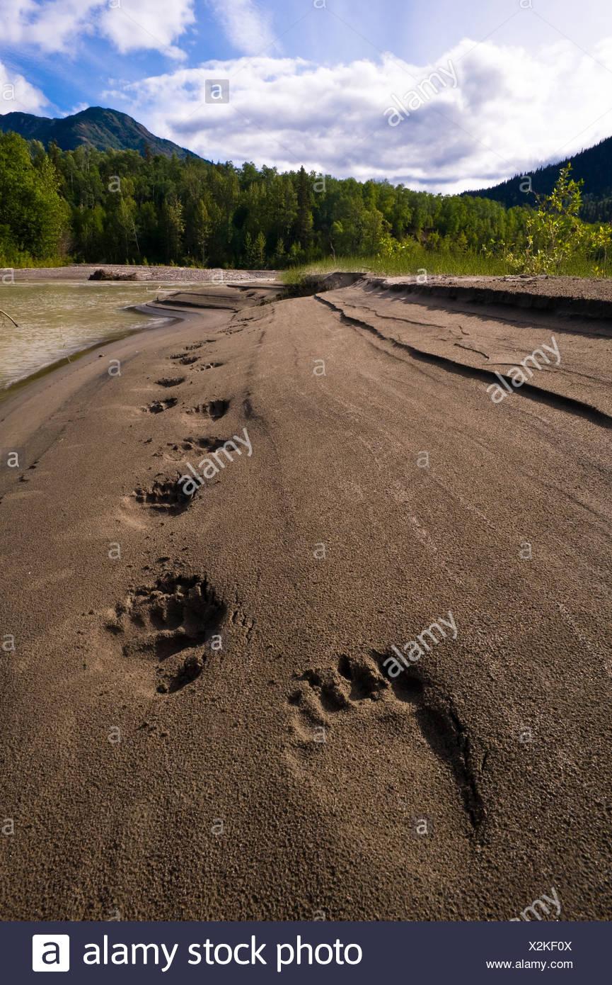 Grizzly Bear Fuß Drucke, Inklin River, North Western British Columbia, Kanada Stockbild