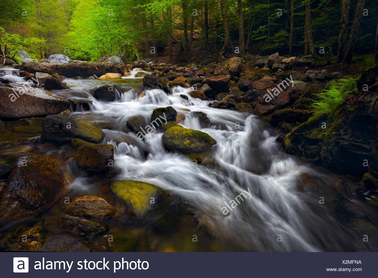 Aspromonte-Nationalpark, Gambarie, Reggio Calabria, Kalabrien, Italien, Menta Wasserlandschaft Stockbild