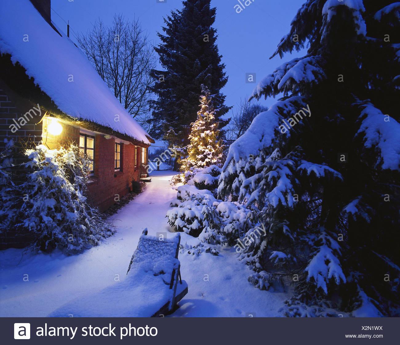 norddeutschland bauernhaus garten weihnachtsbaum abend winter europa deutschland wohnhaus. Black Bedroom Furniture Sets. Home Design Ideas