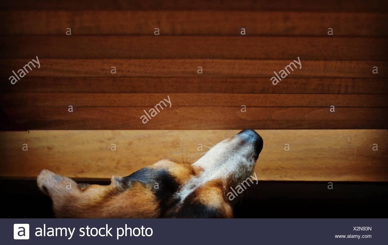 Direkt über dem Schuss von Hund zu Hause Stockbild