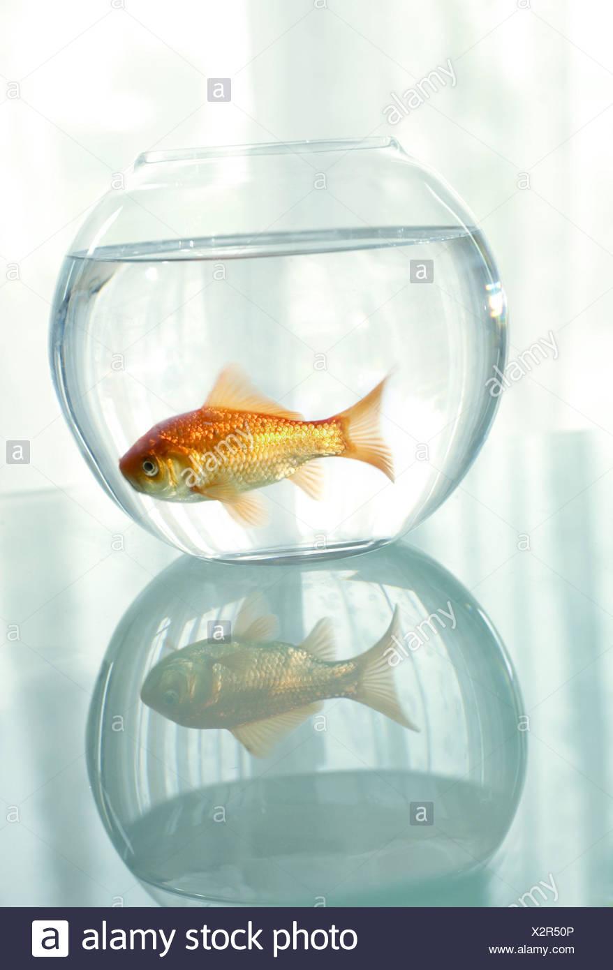 Tolle Angler Fisch Färbung Seite Fotos - Malvorlagen Ideen - blogsbr ...