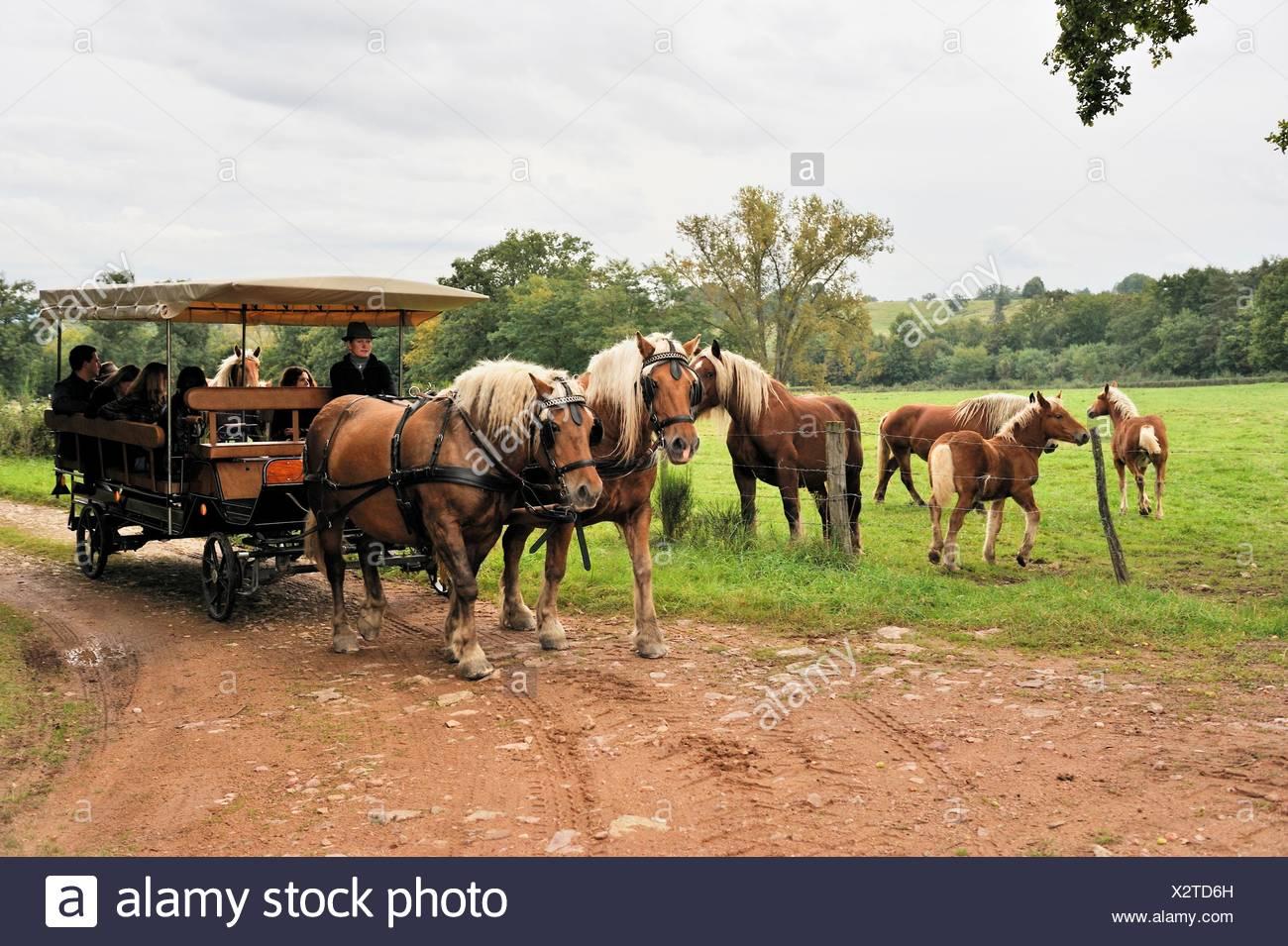 Schlendern Sie mit einer Pferdekutsche, Pre Fleuri Farm, Sermentizon, regionaler Naturpark Livradois Forez, Puy de Dome-Abteilung, Stockbild