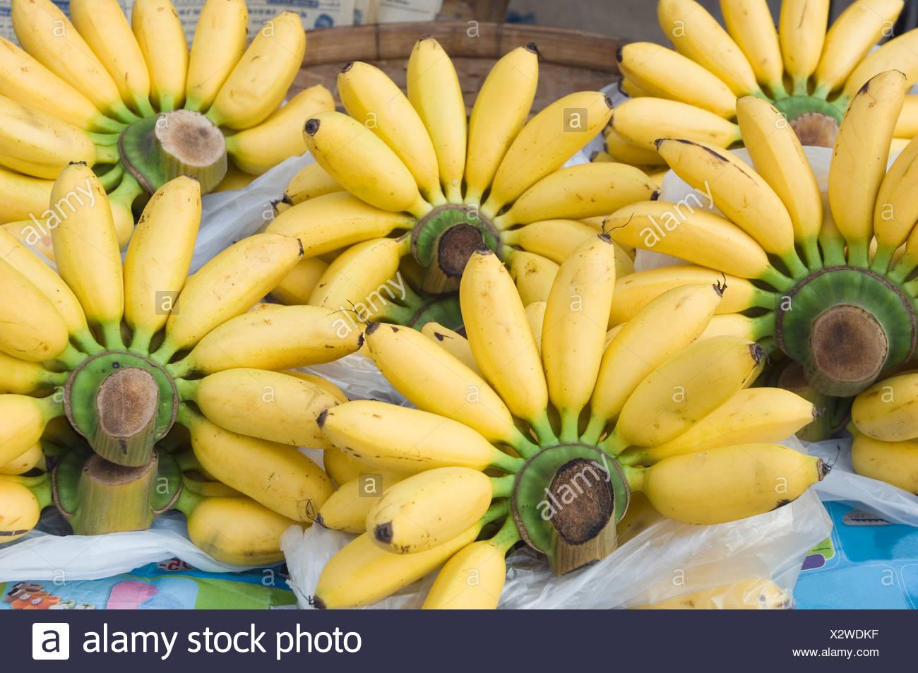 Baby Bananen in den Markt, Sukhothai, Thailand, Asien Stockbild