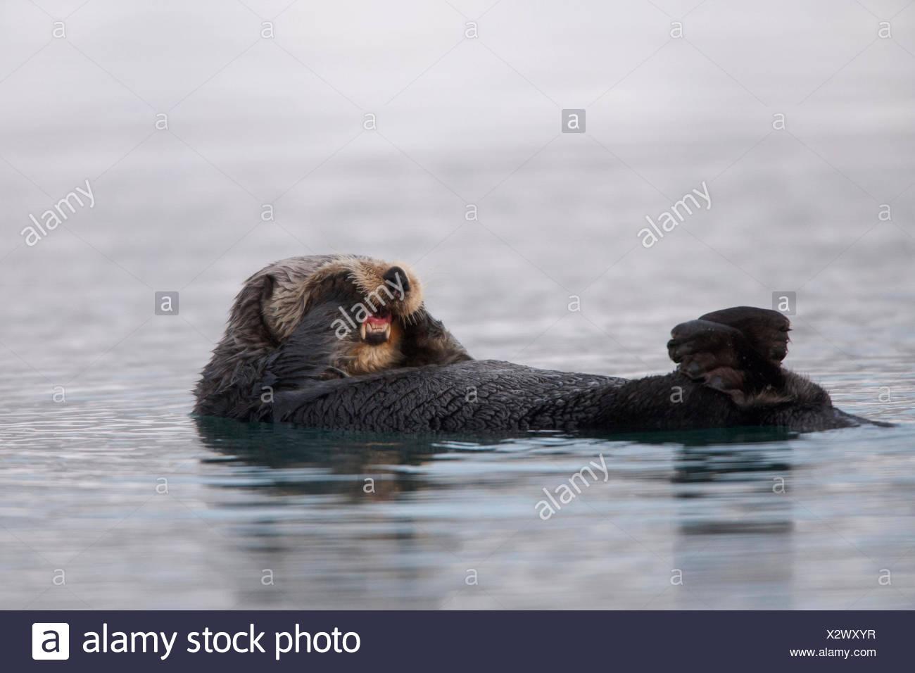 Beste Malvorlagen Otter Färbung Malvorlagen Bilder - Entry Level ...