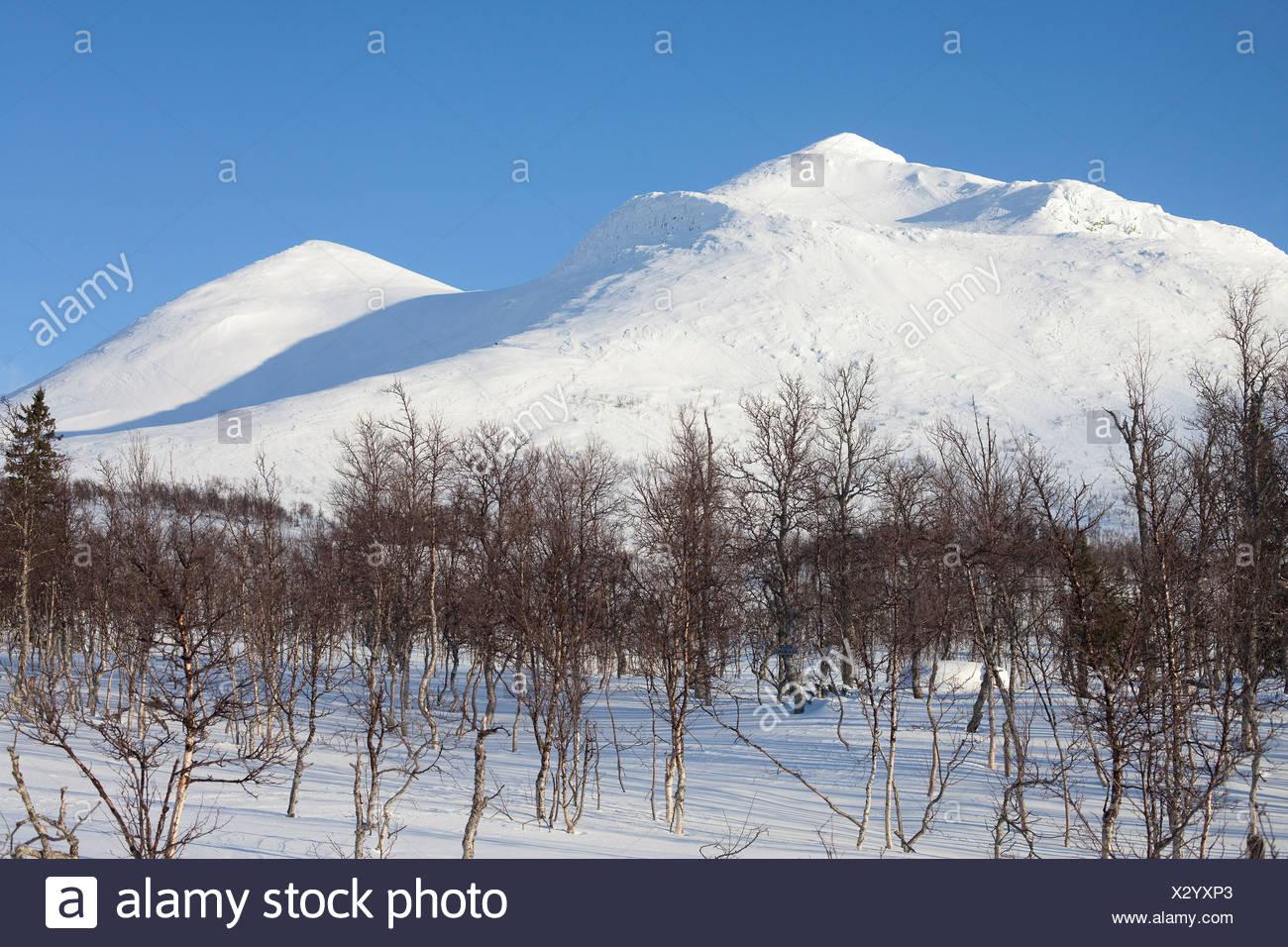 Verschneite Berggipfel gegen den blauen Himmel mit kahlen Bäumen im Vordergrund Stockbild