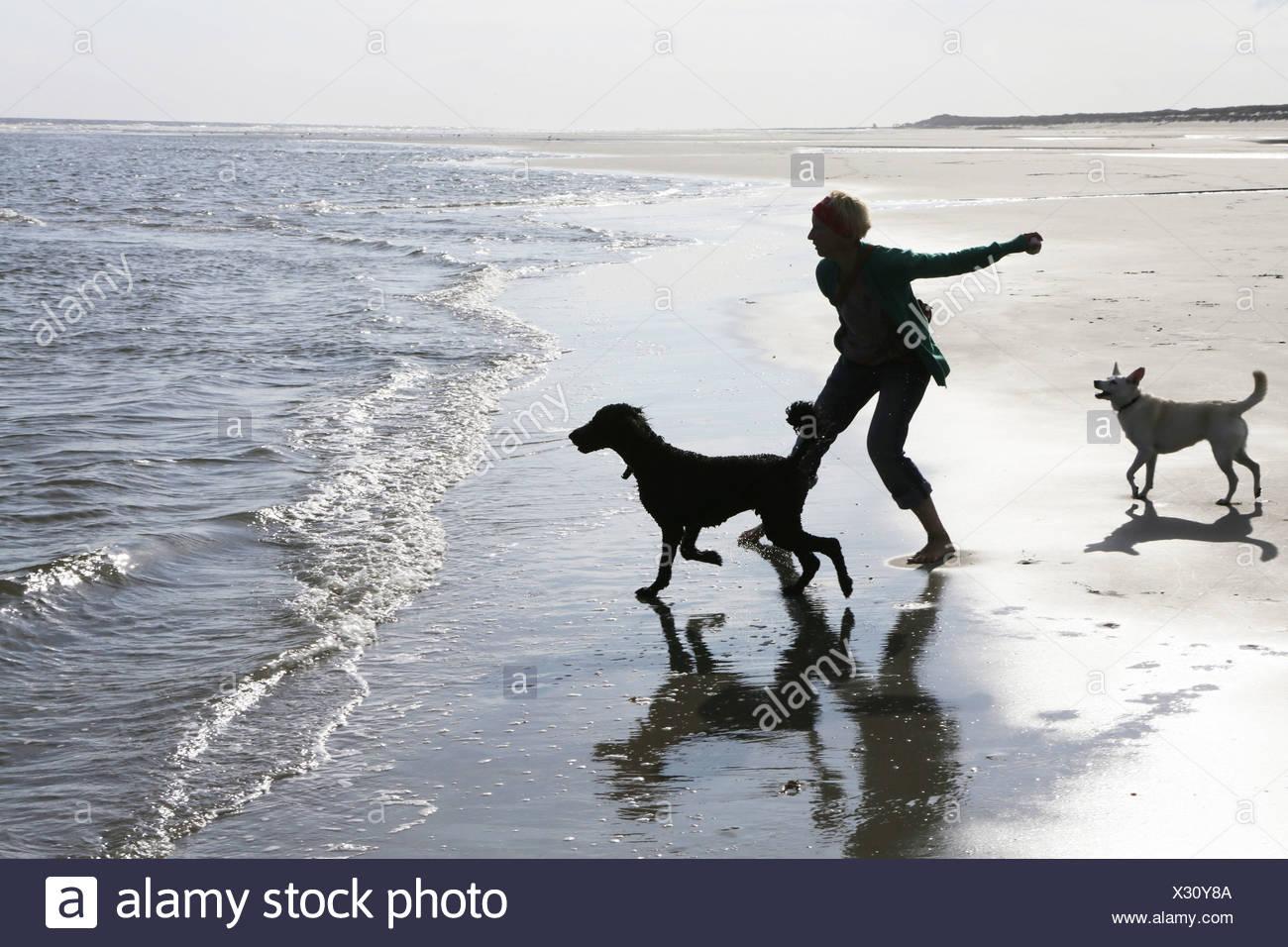 Deutschland, Niedersachsen, Ostfriesland, Langeoog, Frau spielt mit ihren Hunden am Strand Stockbild