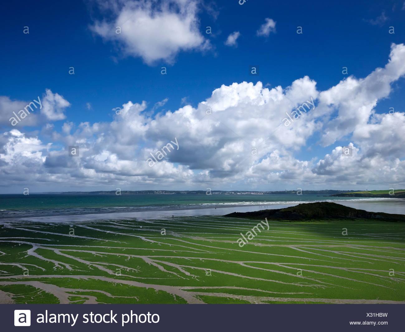 Meersalat (ulva armoricana), Algen in der Bucht von Douarnenez, Finistère, Bretagne, Frankreich, Europa, publicground Stockbild