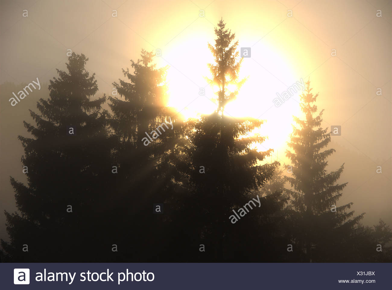 Deutschland Europa Schwarzwald Titisee Holz Wald Sonnenaufgang Bäume Nebel Nebel Sonne Aureole Corona Stimmung der Abenddämmerung twi Stockbild