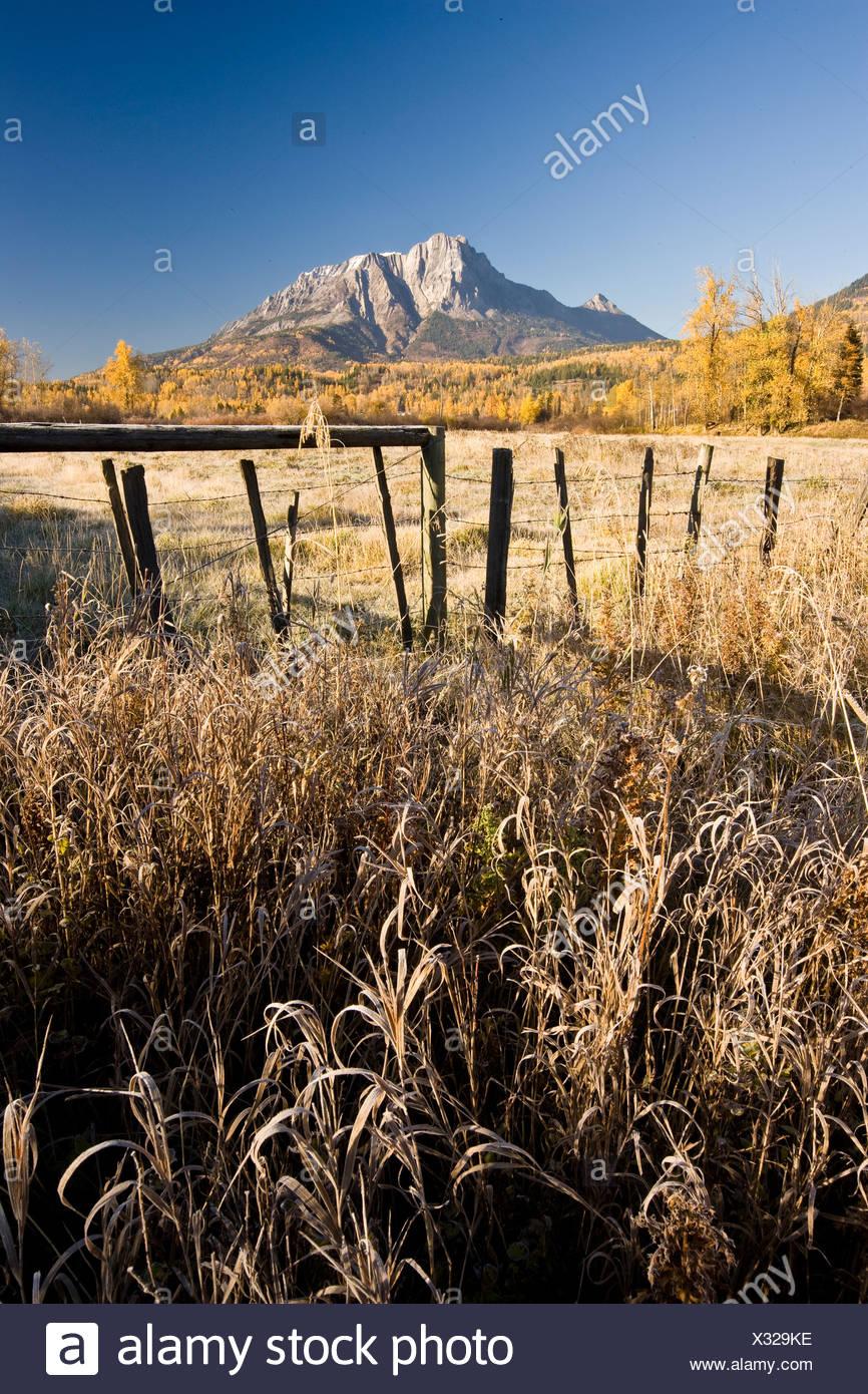 Feld und Mount Hosmer im Herbst in der Nähe von Fernie, BC, Kanada. Stockfoto