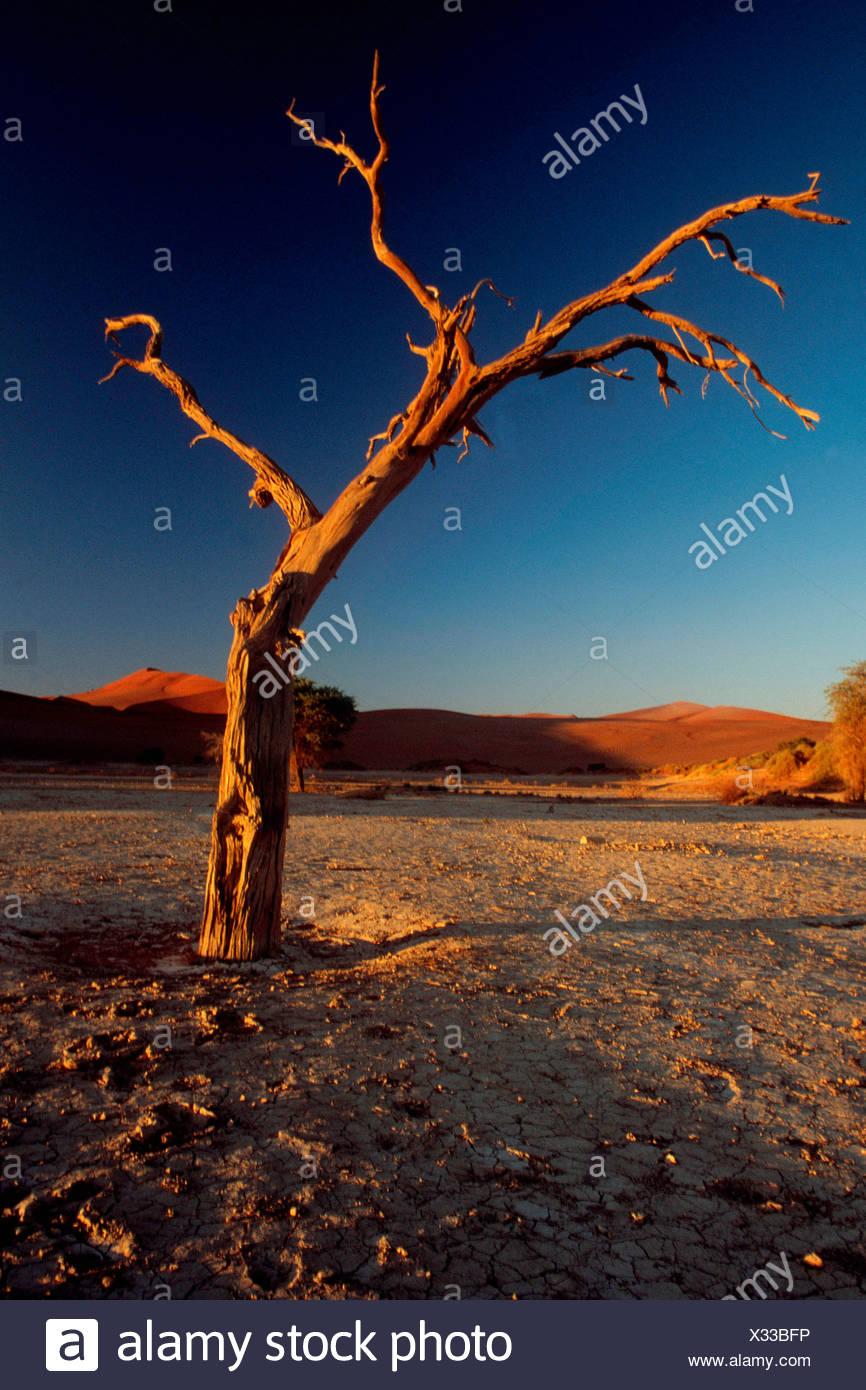 Toten Baum / Toter Baum Stockbild